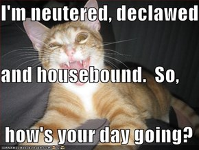 I'm neutered, declawed and housebound.  So,  how's your day going?