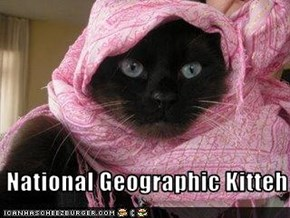 National Geographic Kitteh