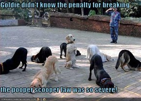 Goldie didn't know the penalty for breaking  the pooper scooper law was so severe!