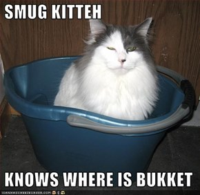SMUG KITTEH   KNOWS WHERE IS BUKKET
