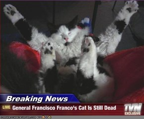 Breaking News - General Francisco Franco's Cat Is Still Dead