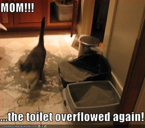 MOM!!!  ...the toilet overflowed again!