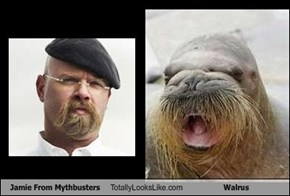 Jamie From Mythbusters Totally Looks Like Walrus