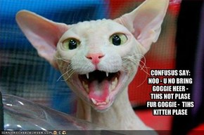CONFUSUS SAY: NOO - U NO BRING GOGGIE HEER - TIHS NOT PLASE FUR GOGGIE -  TIHS KITTEH PLASE