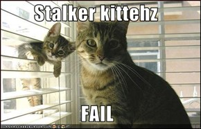 Stalker kittehz  FAIL
