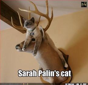 Sarah Palin's cat