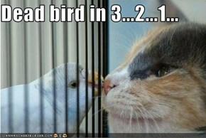 Dead bird in 3...2...1...