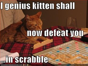 I genius kitten shall  now defeat you ...in scrabble
