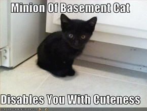Minion Of Basement Cat  Disables You With Cuteness
