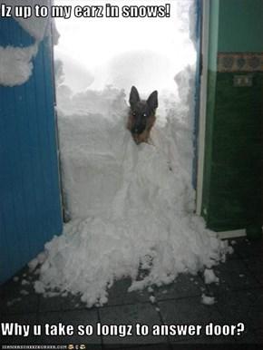 Iz up to my earz in snows!  Why u take so longz to answer door?