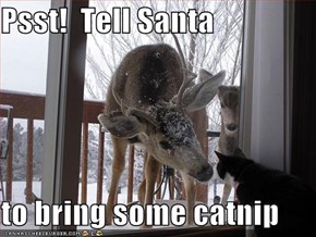 Psst!  Tell Santa  to bring some catnip