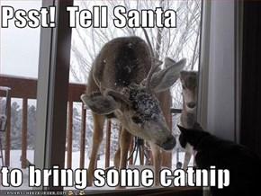 Psst!  Tell Santa  to bring some catnip