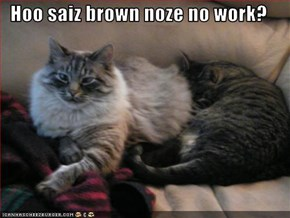 Hoo saiz brown noze no work?