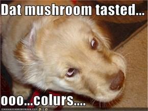 Dat mushroom tasted...  ooo...colurs....