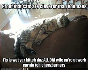 Proof that cats are cleverer than hoomans