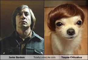 Javier Bardem Totally Looks Like Toupee Chihuahua