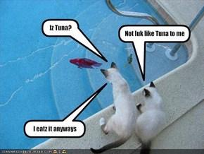 Iz Tuna?