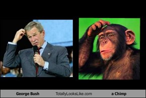 George Bush Totally Looks Like a Chimp