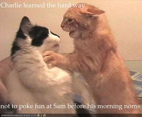 Charlie learned the hard way   not to poke fun at Sam before his morning noms