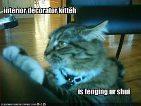 interior decorator kitteh