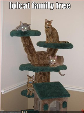 lolcat family tree