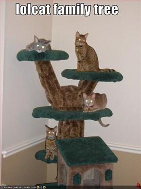 lolcat family tree