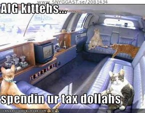 AIG kittehs...  spendin ur tax dollahs
