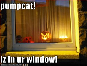pumpcat!  iz in ur window!