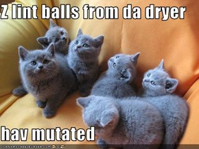 Z lint balls from da dryer  hav mutated