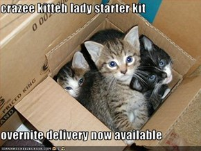 crazee kitteh lady starter kit  overnite delivery now available