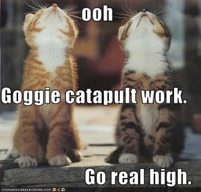 ooh Goggie catapult work. Go real high.