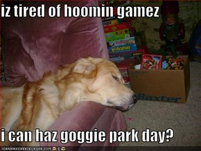 iz tired of hoomin gamez  i can haz goggie park day?