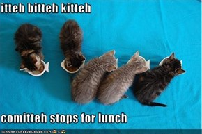 itteh bitteh kitteh  comitteh stops for lunch