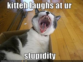 kitteh laughs at ur   stupidity