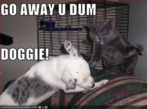 GO AWAY U DUM DOGGIE!