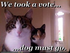 We took a vote...  ...dog must go.