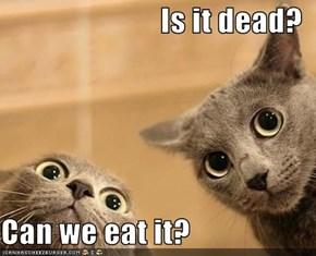 Is it dead?  Can we eat it?