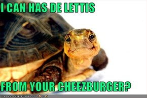 I CAN HAS DE LETTIS  FROM YOUR CHEEZBURGER?