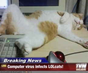 Breaking News - Computer virus infects LOLcats!