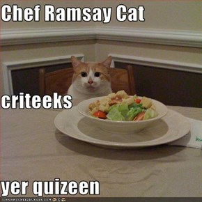 Chef Ramsay Cat criteeks yer quizeen