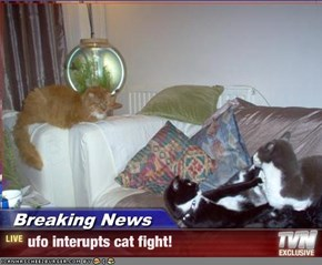 Breaking News - ufo interupts cat fight!