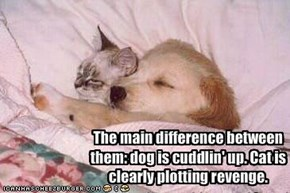 The main difference between them: dog is cuddlin' up. Cat is clearly plotting revenge.