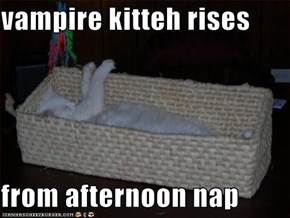 vampire kitteh rises  from afternoon nap