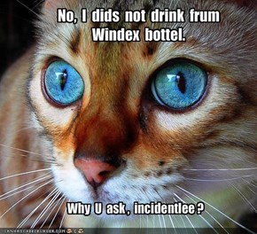 No,  I  dids  not  drink  frum