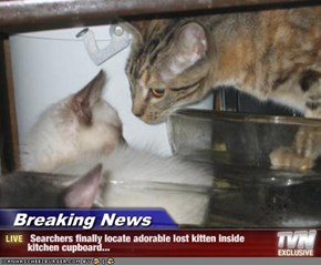 Breaking News -  Searchers finally locate adorable lost kitten inside        kitchen cupboard...