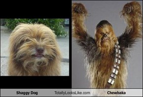 Shaggy Dog Totally Looks Like Chewbaka