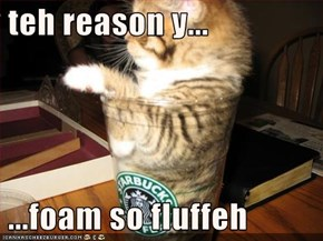 teh reason y...   ...foam so fluffeh