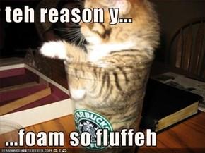 teh reason y...   ...foam so fluffeh