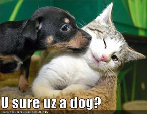 U sure uz a dog?