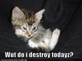 Wut do i destroy todayz?